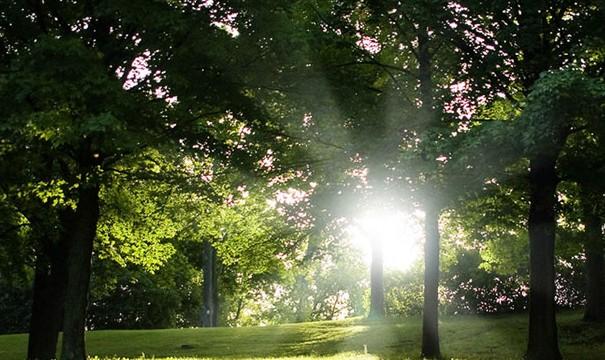 日光を浴びながら1日1時間の散歩をするようになり変わったこと